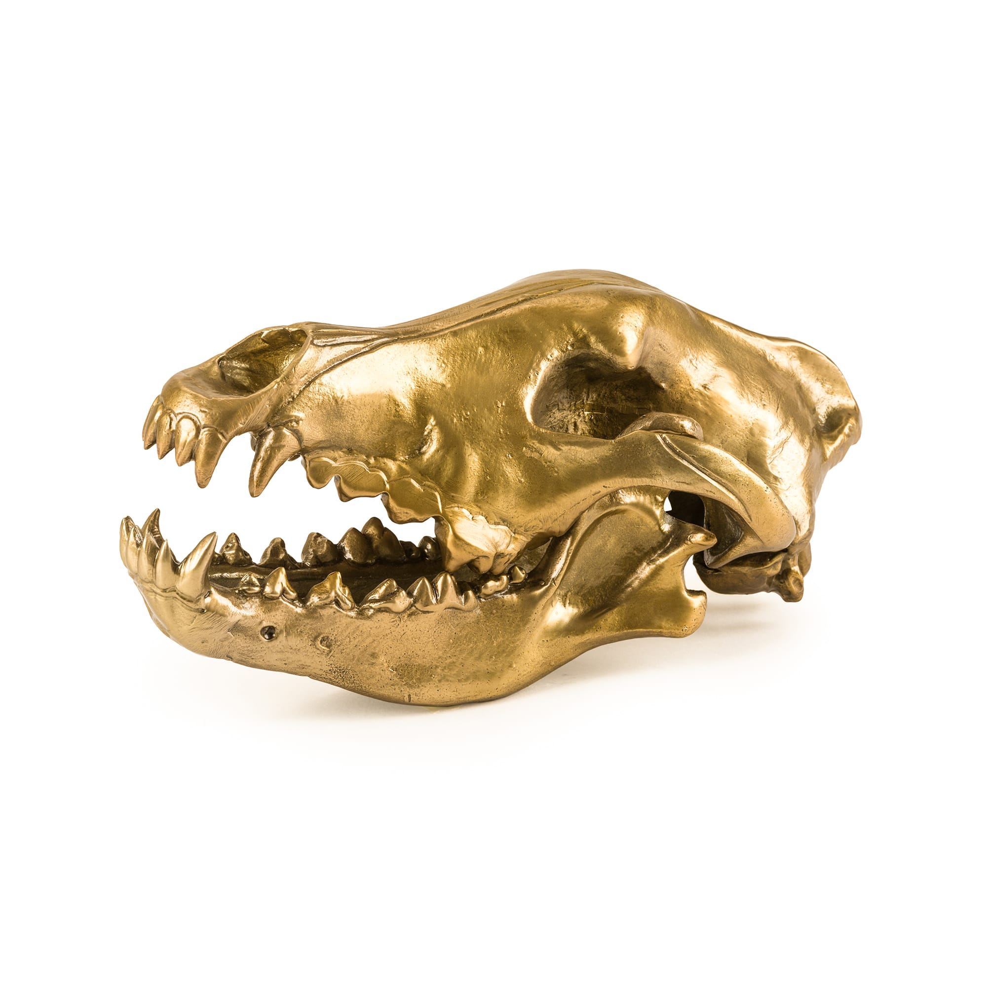 Seletti Wunderkammer Wolf This Way Wolf Skull