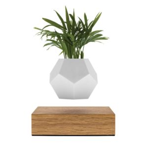 Flyte Lyfe Levitating Planter w Oak Base
